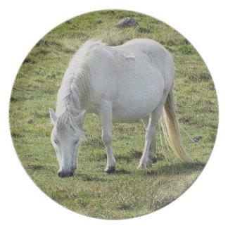 White Dartmoor Pony Grazeing Summer Plate