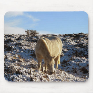 White dartmoor pony grazing in snow mouse mat