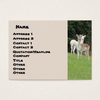 White Deer Business Card