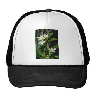 white Dendrobium flowers Hats
