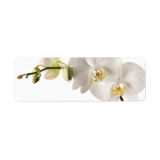 White Dendrobium Orchid Flower Spray Floral Blank