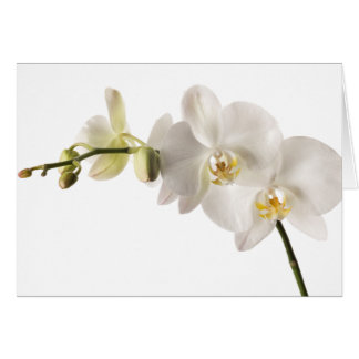 White Dendrobium Orchid Flower Spray Floral Blank Greeting Card