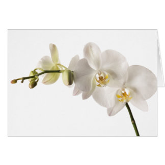 White Dendrobium Orchid Flower Spray Floral Blank Note Card