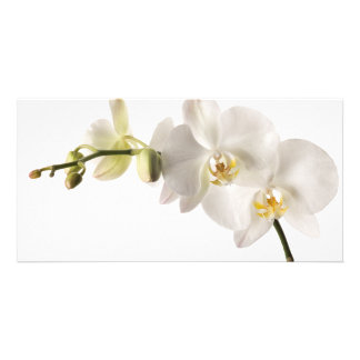 White Dendrobium Orchid Flower Spray Floral Blank Photo Card Template
