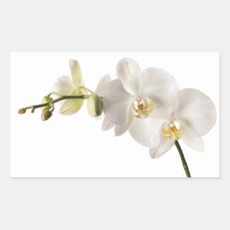 White Dendrobium Orchid Flower Spray Floral Blank Rectangular Sticker