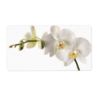 White Dendrobium Orchid Flower Spray Floral Blank Shipping Label