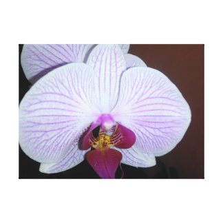 White Dendrobium Orchid With Purple Veins Canvas Print