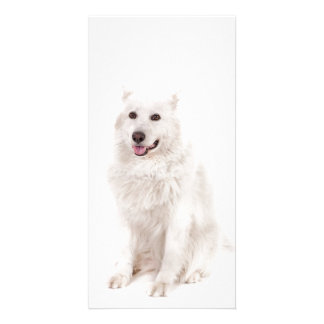WHITE DOG DIGITAL REALISM PETS HAPPY LOGO CAUSES A CUSTOMISED PHOTO CARD