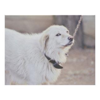 White dog custom flyer