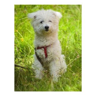 White dog flyer design
