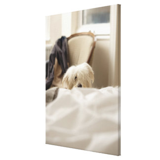 White dog hiding behind bed (differential focus) canvas print