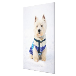 White dog in clothes in the snow. canvas print