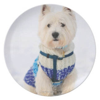 White dog in clothes in the snow. plate