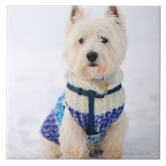 White dog in clothes in the snow. tile