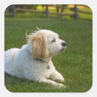 White dog square sticker