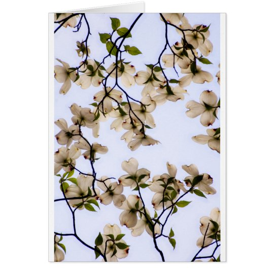 White Dogwood Blossom Card