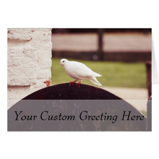 White Dove On A Fence Card