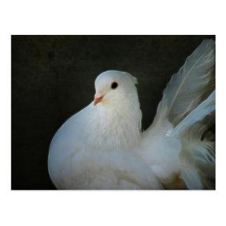 White dove peace symbol post card