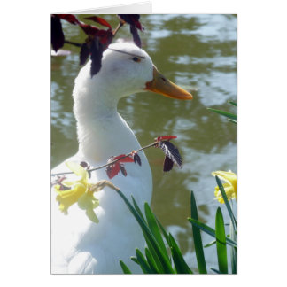 White Duck In Daffodils Happy Easter Card
