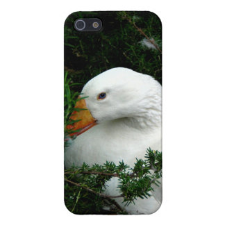 WHITE DUCK RESTING iPhone 5/5S CASES