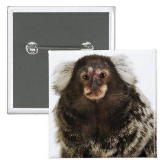 White eared Marmoset on branch, close up, studio 15 Cm Square Badge