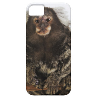 White eared Marmoset on branch, close up, studio iPhone 5 Case