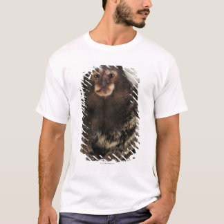 White eared Marmoset on branch, close up, studio T-Shirt