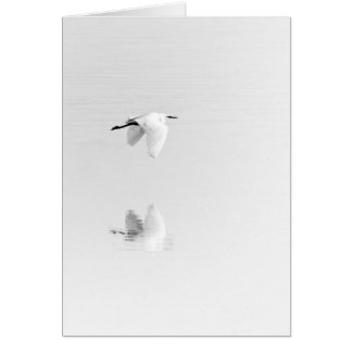 White egret flies over pond card