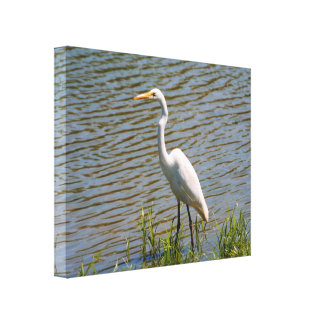 White Egret Tropical Bird Photo Stretched Canvas Prints