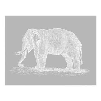 White Elephant Vintage 1800s Illustration Postcard