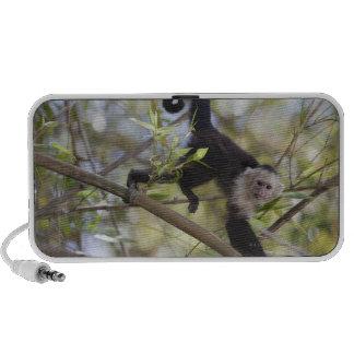 White-Faced Capuchin, Guanacaste, Costa Rica Portable Speakers