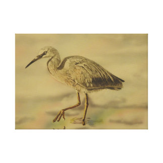 White  faced heron canvas print