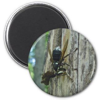 White-Faced Hornet Magnet