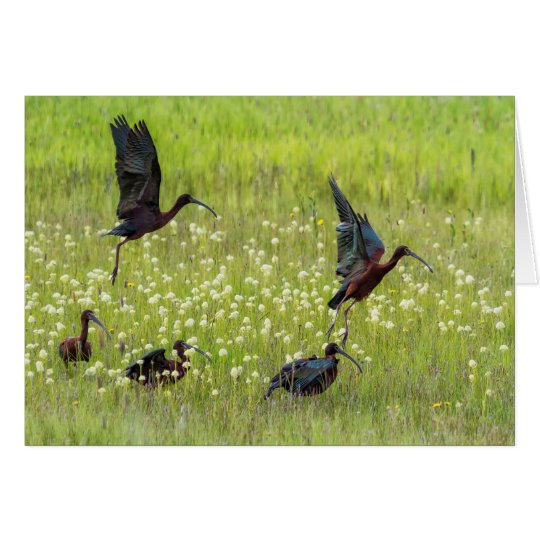 White Faced Ibis Flock Rising No 1 Card