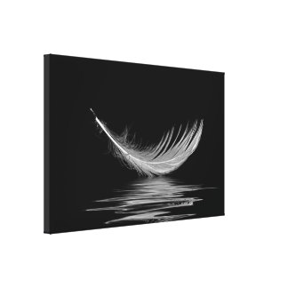 white feather floating on black water canvas print