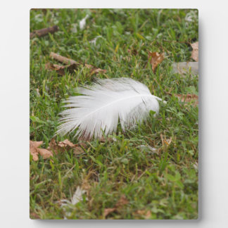 white feather on meadow plaque