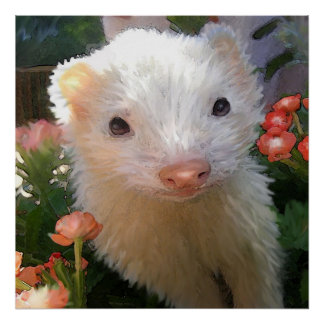 white ferret posters