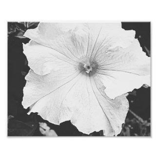 White Floral 10x8 Photo