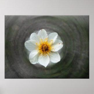 White Flower Dream; No Text Poster