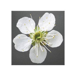 White Flower Gallery Wrap Canvas