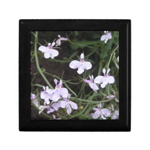 white flower Gift box with stunning photography