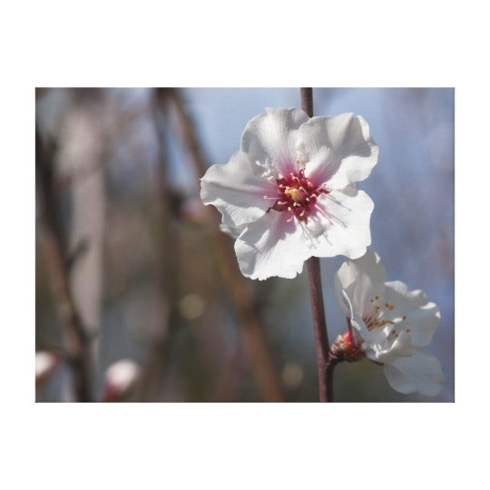 White flower in natural light canvas print