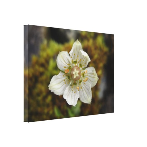White Flower in the Moss Canvas Prints