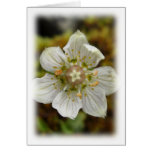 White Flower in the Moss Card