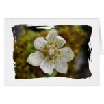White Flower in the Moss Greeting Cards