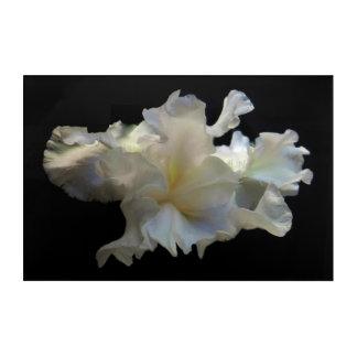 White Flower Magic: Iris Acrylic Wall Art