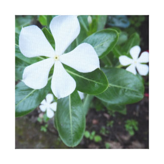 White Flower on Green Leaves Stretched Canvas Prints