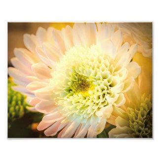 White Flower Photo Print