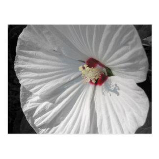 white flower post cards
