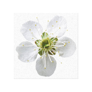 White Flower Stretched Canvas Print